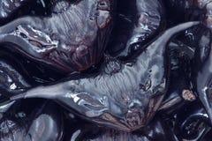 Κάστανο νερού στοκ φωτογραφία με δικαίωμα ελεύθερης χρήσης