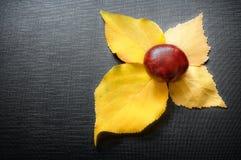Κάστανο που βρίσκεται στα φύλλα Στοκ εικόνα με δικαίωμα ελεύθερης χρήσης