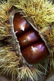 κάστανο Στοκ Φωτογραφίες
