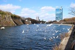 Κάστρο της Ιαπωνίας Οζάκα Στοκ Φωτογραφίες