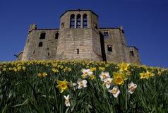 κάστρο warkworth Στοκ εικόνα με δικαίωμα ελεύθερης χρήσης