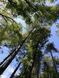 Κάτω από τα δέντρα Στοκ φωτογραφίες με δικαίωμα ελεύθερης χρήσης