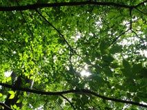 Κάτω από τα δέντρα Στοκ Εικόνες