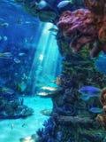 κάτω από την επιφάνεια νερού στοκ εικόνες