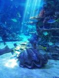 κάτω από την επιφάνεια νερού στοκ εικόνες με δικαίωμα ελεύθερης χρήσης