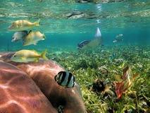 Κάτω από τη ζωή θάλασσας νερού Στοκ Φωτογραφία