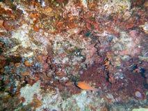 Κάτω από τη θάλασσα Μεσόγειος σκοπέλων στοκ εικόνα