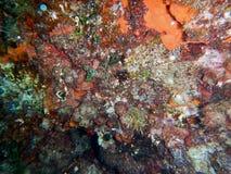 Κάτω από τη θάλασσα Μεσόγειος σκοπέλων στοκ φωτογραφία με δικαίωμα ελεύθερης χρήσης