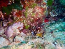 Κάτω από τη θάλασσα Μεσόγειος σκοπέλων στοκ εικόνες με δικαίωμα ελεύθερης χρήσης