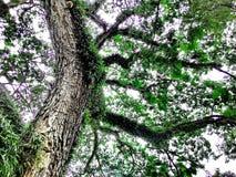 Κάτω από τη σκιά ενός δέντρου Στοκ εικόνες με δικαίωμα ελεύθερης χρήσης