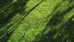Κάτω από τη σκιά του χορτοτάπητα φθινοπώρου Στοκ εικόνα με δικαίωμα ελεύθερης χρήσης