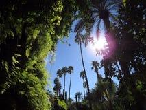 Κάτω από τον ήλιο του Μαρόκου Στοκ Εικόνα