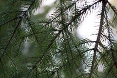 Κάτω από τον κομψό κλάδο δέντρων στοκ εικόνα