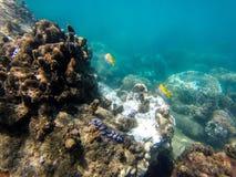κάτω από τον κόσμο ύδατος Στοκ φωτογραφίες με δικαίωμα ελεύθερης χρήσης