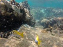κάτω από τον κόσμο ύδατος Στοκ Φωτογραφία