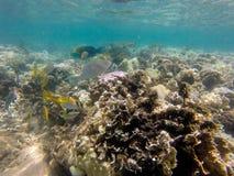 κάτω από τον κόσμο ύδατος Στοκ φωτογραφία με δικαίωμα ελεύθερης χρήσης