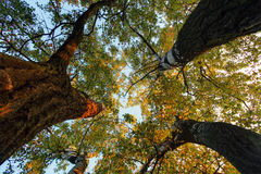 Κάτω από το δέντρο στο δάσος στην πτώση Στοκ Φωτογραφία