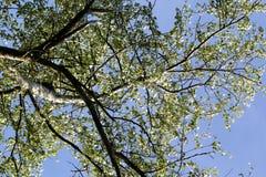 κάτω από το δέντρο Στοκ εικόνα με δικαίωμα ελεύθερης χρήσης