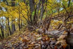 Κάτω από το δέντρο Στοκ εικόνες με δικαίωμα ελεύθερης χρήσης