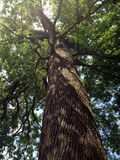 κάτω από το δέντρο Στοκ Φωτογραφίες