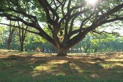 Κάτω από το γιγαντιαίο δέντρο αριθ. 2 στοκ φωτογραφία