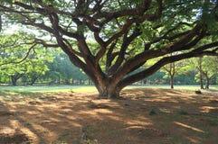 Κάτω από το γιγαντιαίο δέντρο στοκ φωτογραφία με δικαίωμα ελεύθερης χρήσης