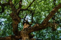 Κάτω από το μεγάλο δέντρο Στοκ Εικόνες