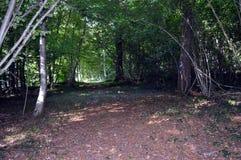 Κάτω από το ξύλο και τα δέντρα με μια πορεία Στοκ φωτογραφία με δικαίωμα ελεύθερης χρήσης