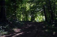Κάτω από το ξύλο και τα δέντρα με μια πορεία Στοκ Φωτογραφία