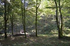Κάτω από το ξύλο και τα δέντρα με μια πορεία Στοκ Εικόνα