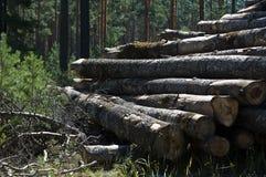κάτω από το πριονισμένο δάσ&omicr Στοκ εικόνες με δικαίωμα ελεύθερης χρήσης