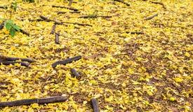 Κάτω από το χρυσό υπόβαθρο δέντρων ντους στοκ εικόνα με δικαίωμα ελεύθερης χρήσης