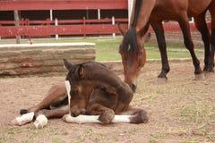 κάτω από foal που βάζει τις νε&omicr Στοκ Φωτογραφίες