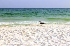 Κάτω από seagull το ρολόι στοκ φωτογραφίες με δικαίωμα ελεύθερης χρήσης
