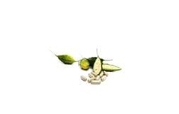 Κάψα χορταριών με το πράσινο βοτανικό φυτό φύλλων και μπουκαλιών Στοκ φωτογραφία με δικαίωμα ελεύθερης χρήσης