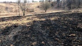 Κάψιμο άνοιξη της ξηράς χλόης του περασμένου χρόνου απόθεμα βίντεο