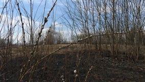 Κάψιμο άνοιξη της ξηράς χλόης του περασμένου χρόνου φιλμ μικρού μήκους
