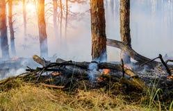 Κάψιμο δασικής πυρκαγιάς Στοκ Εικόνες