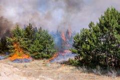 Κάψιμο δασικής πυρκαγιάς Στοκ Φωτογραφίες