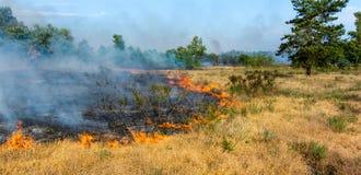 Κάψιμο δασικής πυρκαγιάς Στοκ φωτογραφίες με δικαίωμα ελεύθερης χρήσης