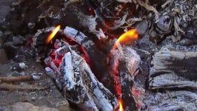Κάψιμο καυσόξυλου στη φωτιά υπαίθρια απόθεμα βίντεο