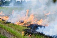 Κάψιμο των αγροτών καλαμιών αχύρου όταν η συγκομιδή είναι πλήρης Στοκ φωτογραφία με δικαίωμα ελεύθερης χρήσης