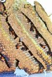 Κάψιμο φωλιών σφηκών Στοκ εικόνα με δικαίωμα ελεύθερης χρήσης