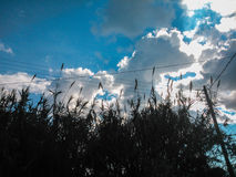 Κάλαμοι και ο ουρανός Στοκ Εικόνα