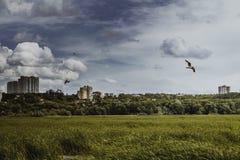 Κάλαμοι στον αέρα και seagulls Στοκ εικόνα με δικαίωμα ελεύθερης χρήσης