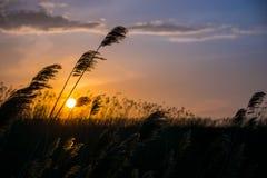 Κάλαμοι στο ηλιοβασίλεμα Στοκ φωτογραφία με δικαίωμα ελεύθερης χρήσης