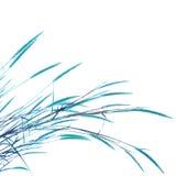 Κάλαμοι της χλόης που απομονώνεται στο άσπρο υπόβαθρο Στοκ εικόνες με δικαίωμα ελεύθερης χρήσης