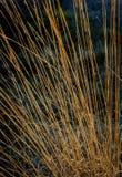 Κάλαμοι Στοκ φωτογραφία με δικαίωμα ελεύθερης χρήσης