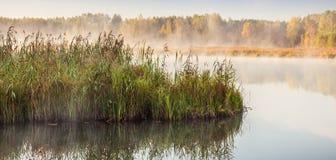 Κάλαμοι Στοκ φωτογραφίες με δικαίωμα ελεύθερης χρήσης