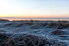 κάλαμος παγωμένος Στοκ φωτογραφίες με δικαίωμα ελεύθερης χρήσης